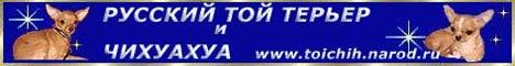 Русский Той-терьер и Чихуахуа. Питомник Элит - Элегант . Высокопородные мини щенки.